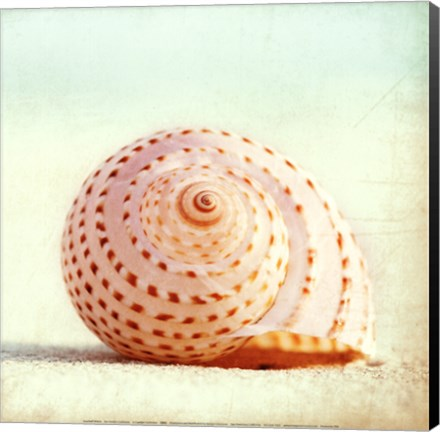 Framed Seashell Voices Print