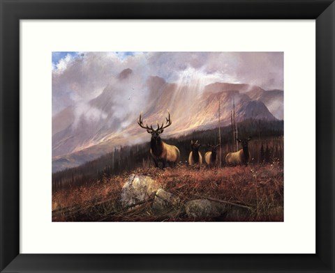 Framed Bookcliffs Elk I I Print