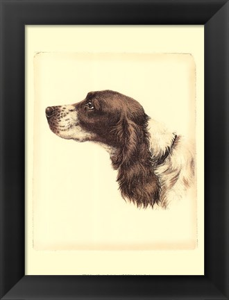 Framed Printed Danchin Cocker Spaniel Print