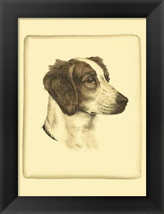 Framed Printed Danchin Brittany Spaniel Print