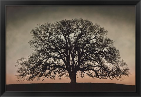 Framed Majestic Oak Print